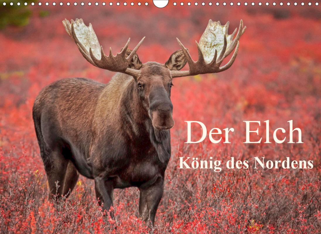 """Kalender """"Der Elch - König des Nordens"""""""